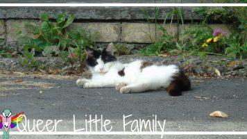 Village Cats: Chapel Cat